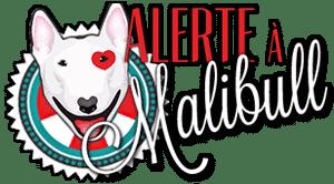 Alerte à Malibull - Accueil